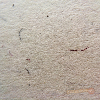 Closeup of the fibrous paper on the inside cover